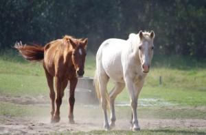 a1620_000797馬